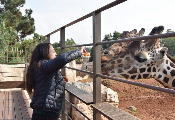 Royaume Du Maroc Jardin Zoologique De Rabat La Rencontre Sauvage