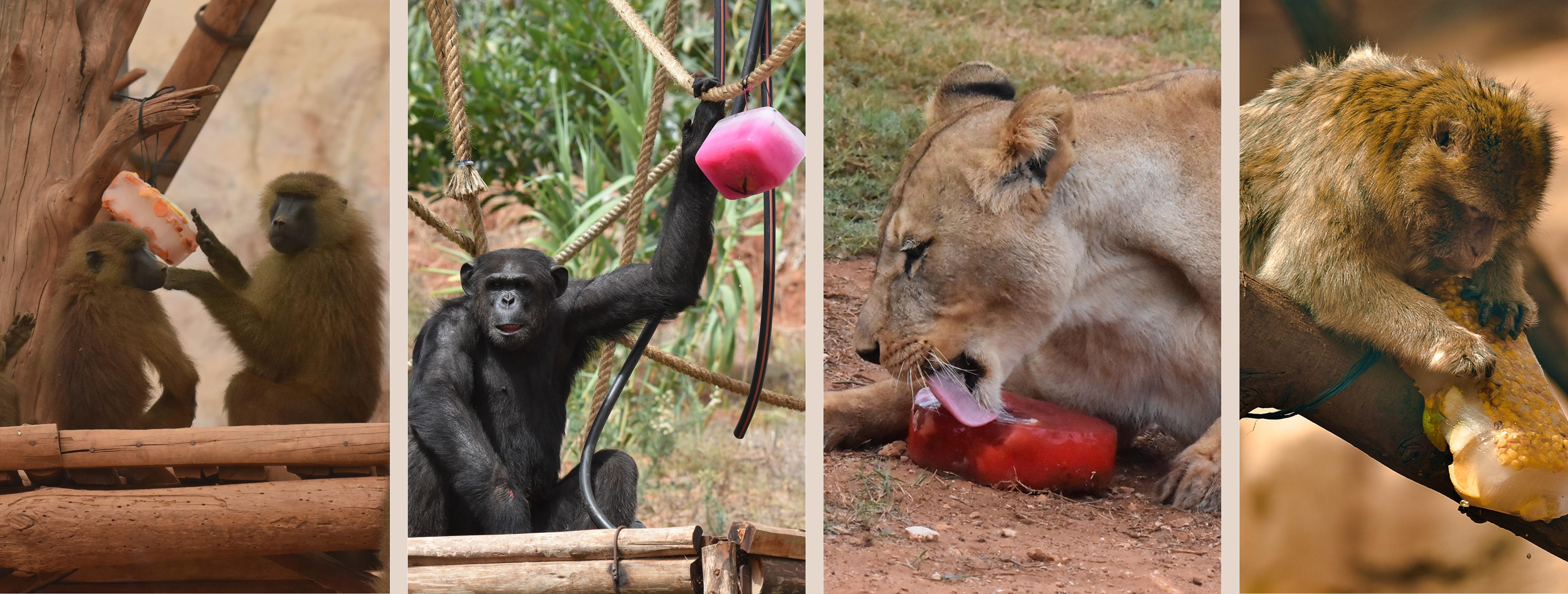 service de rencontres Zoo Comment savoir si le profil de rencontre est faux